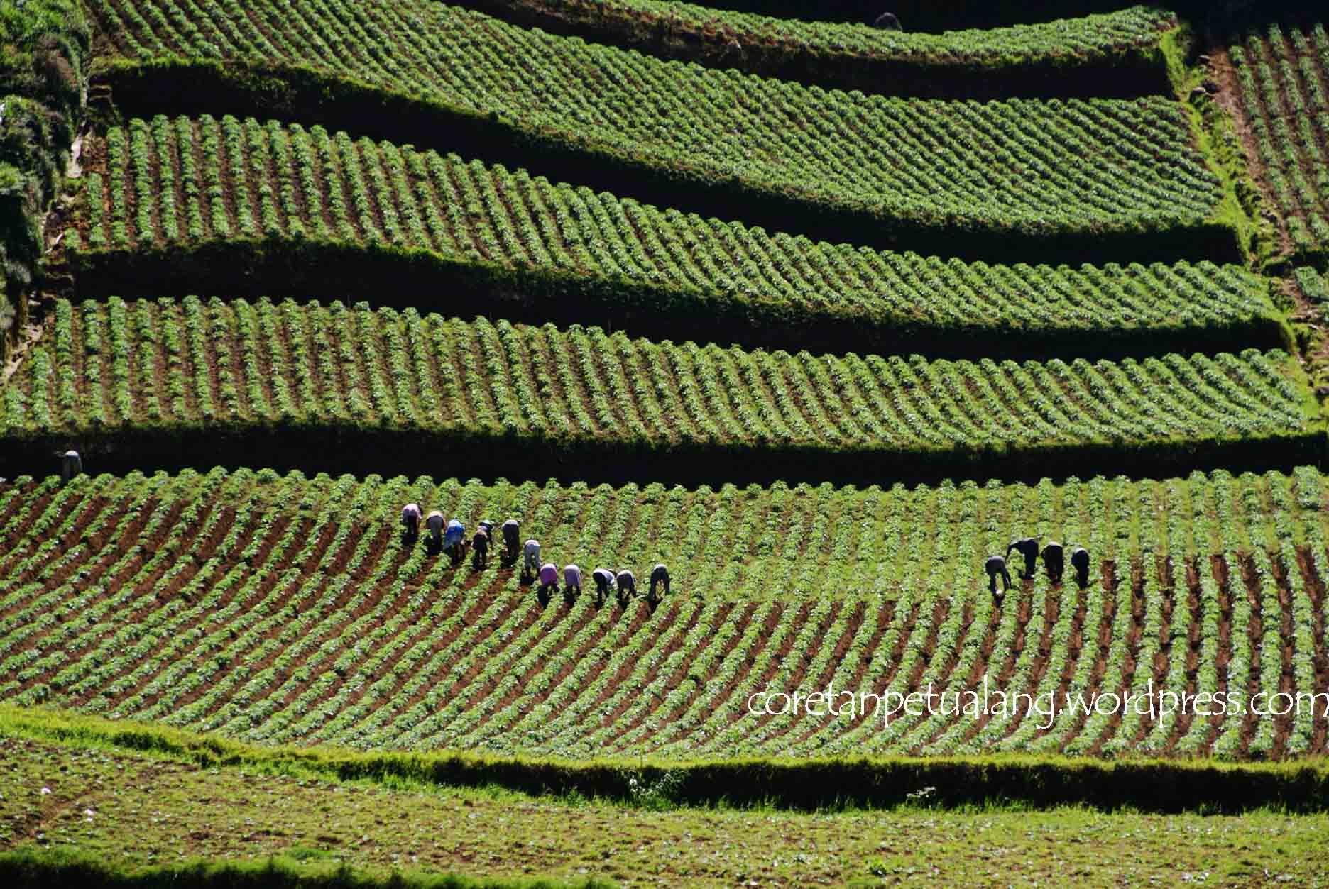 From Dieng Plateau with Love : Season 3 (Masyarakat Dieng) | coretanpetualang's Blog