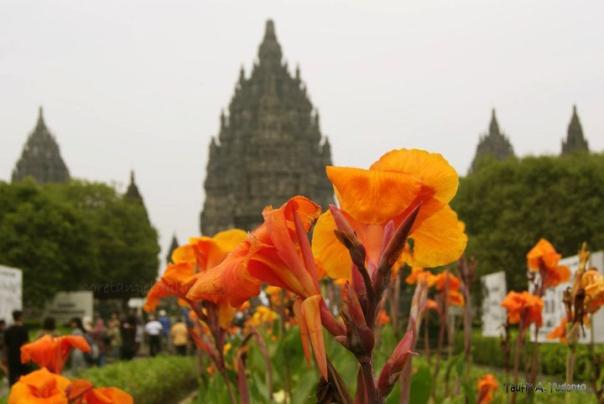 Taman Bunga Di Candi Prambanan
