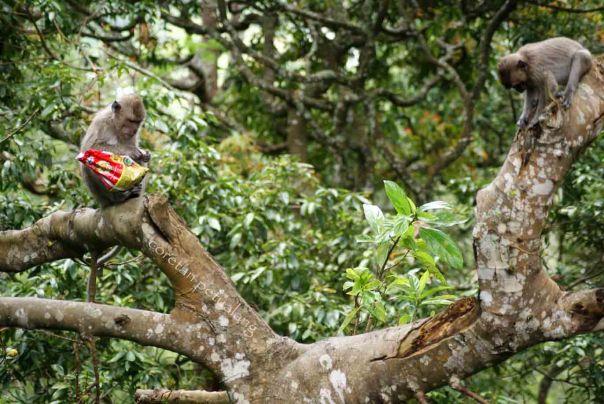 Monyet di Grojogan Sewu